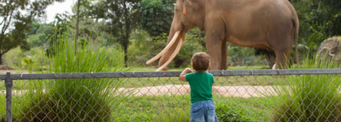 A World of Fun at the Lincoln Park Zoo