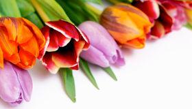 Make Your Indoor Flowers Last Longer