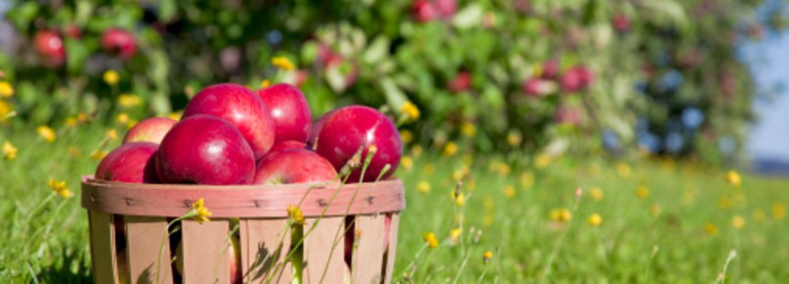 Frolic Through These Festive Orchards