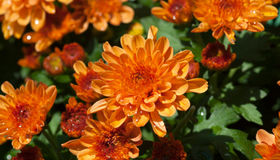 Color Your Garden For Fall Colors