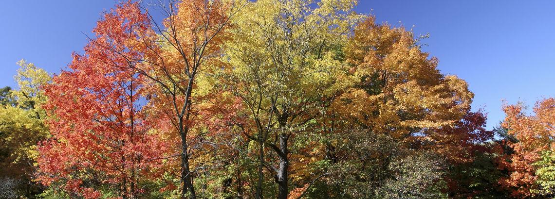 Get to Know The Morton Arboretum