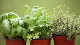 Grow an Indoor Herb Garden