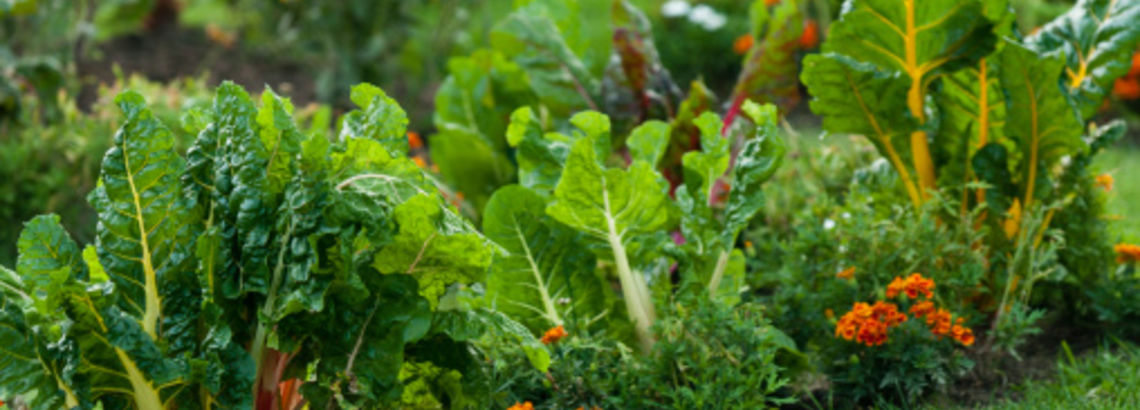 Want Your Vegetables to Grow? Follow This Guide!