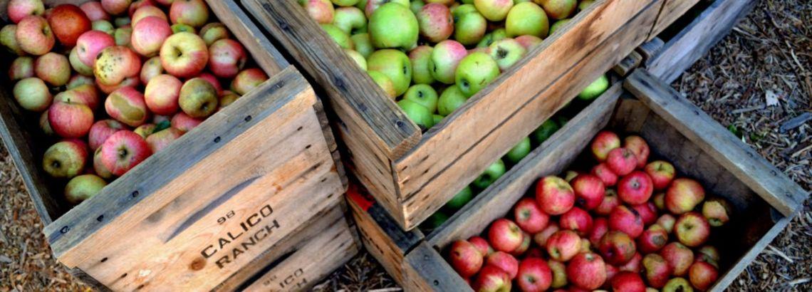 Chicagoland's Best Apple Picking