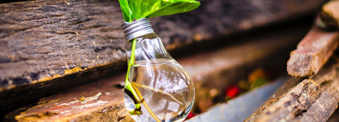 5 Easy, Green Home Upgrades You Can Make Right Now