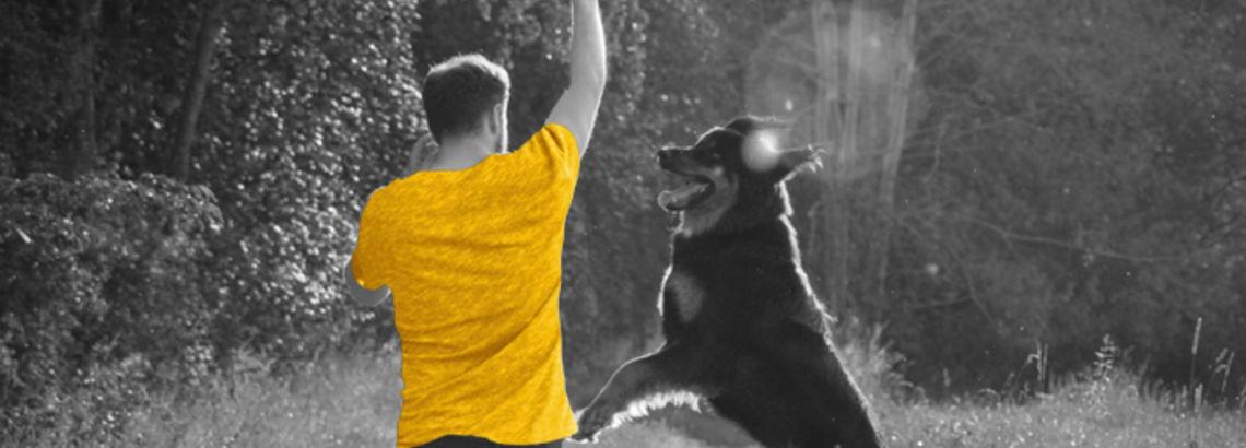 7 of the Best Dog-Friendly Adventures Around Chicagoland