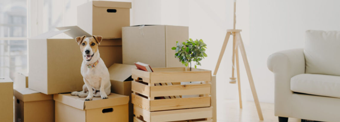 12 Common Household Items to Get Rid of Before Your Sale