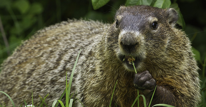 Groundhog Day And Real Estate?