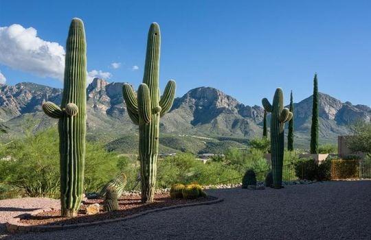 11530 N Skywire Way, Oro Valley, AZ 85737 (28)
