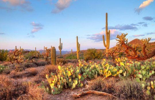 Desert Full Background