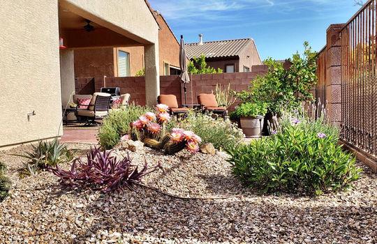 Beautiful Low Care Desert Plantings