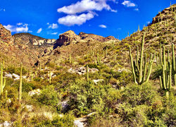The Catalina Foothills