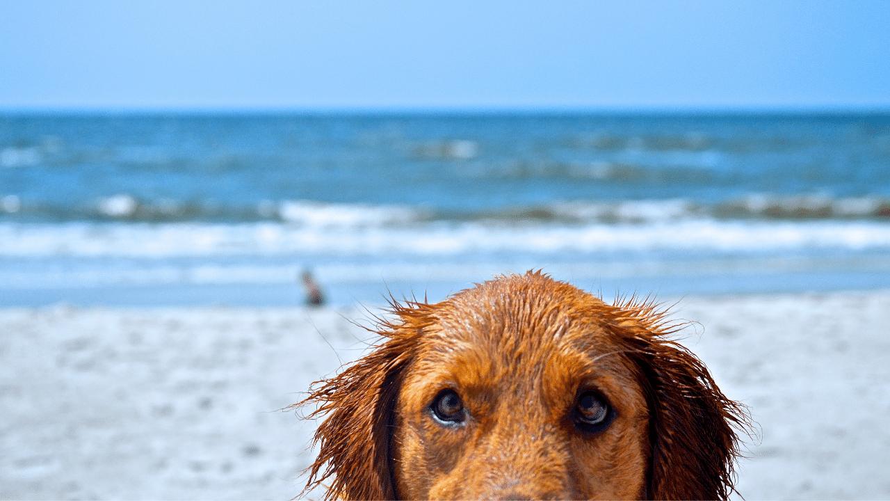Dog-Friendly Blog