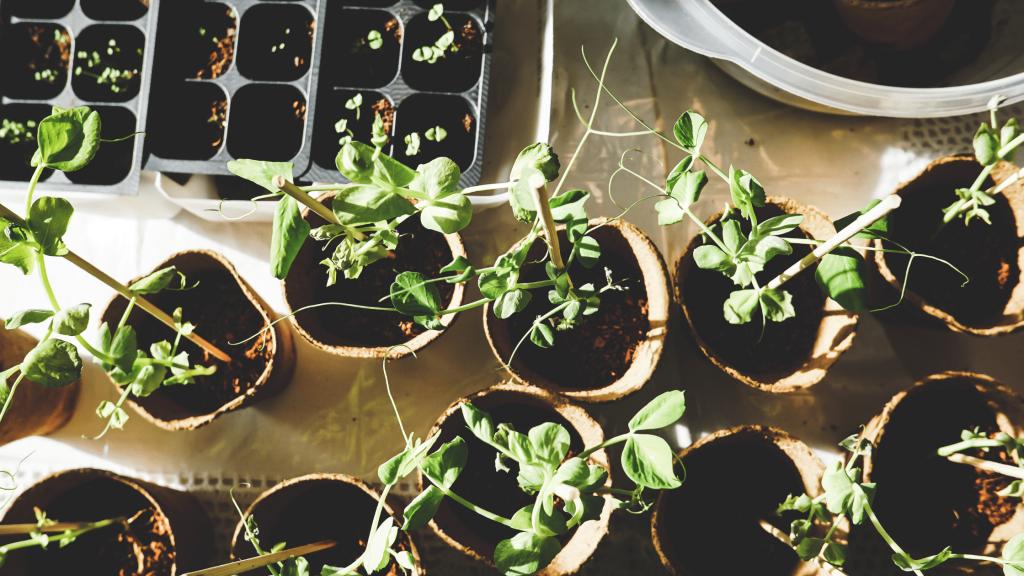 Lawn to Garden Blog - Indoor Plants