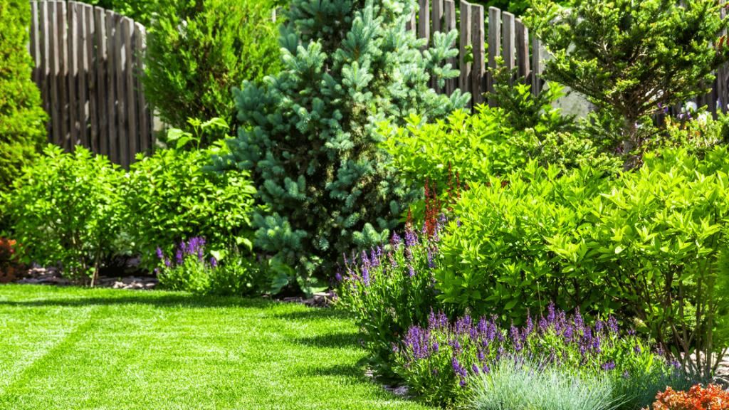 Outdoor Garden with Purple Flowers