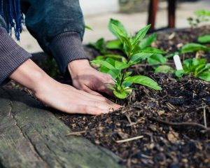 Build your own raised garden bed for seasonal gardening