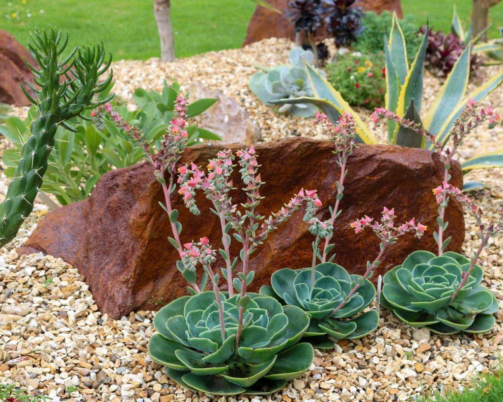 Drought resistant garden for backyard