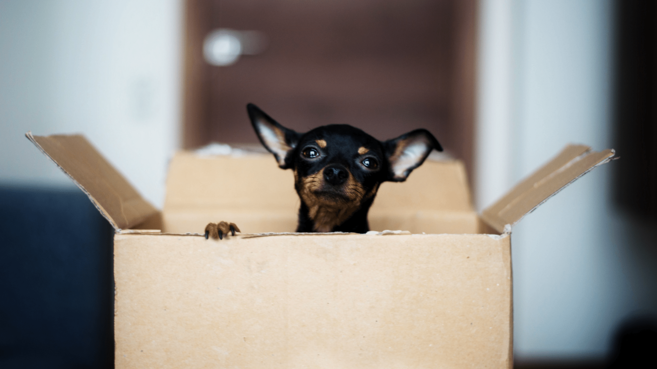 Selling Home With Pets Blog