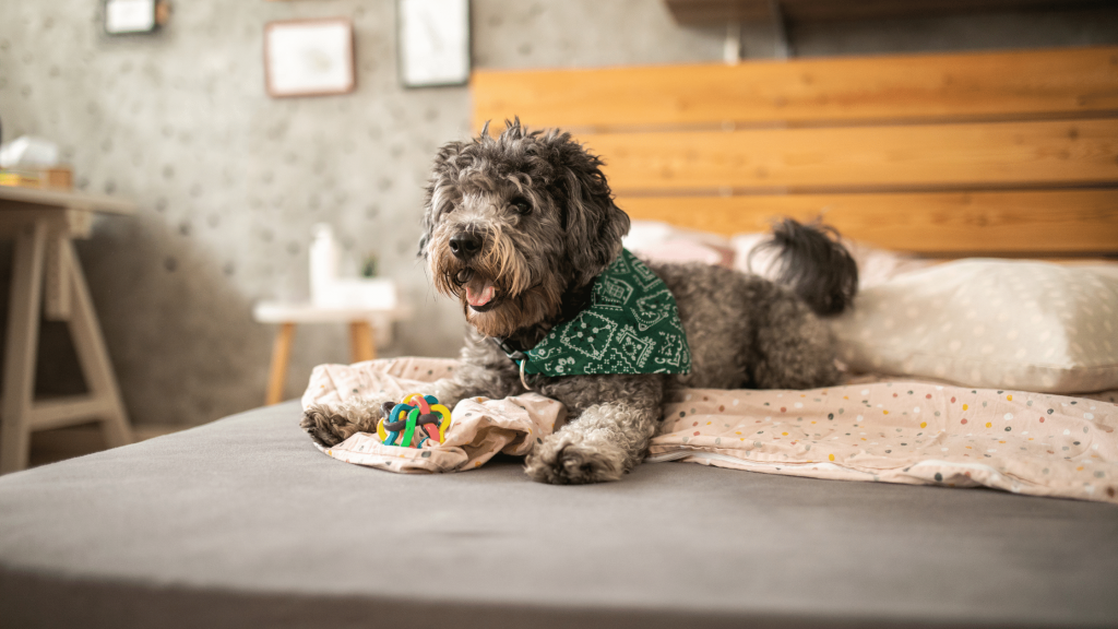 Pet-Friendly Home Blog - Dog on Bed