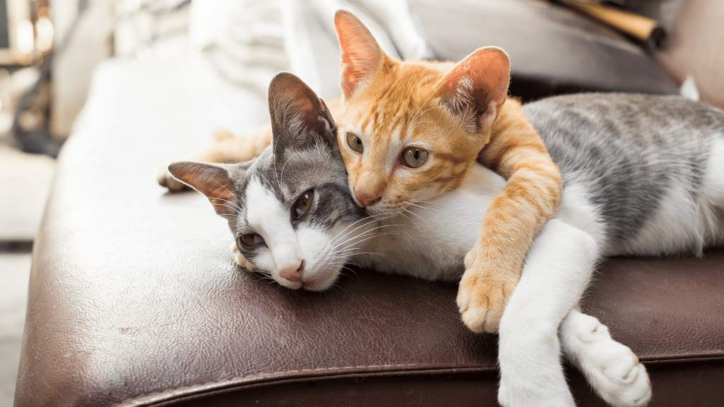 Pet-Friendly Home Blog - Two Kittens Snuggling
