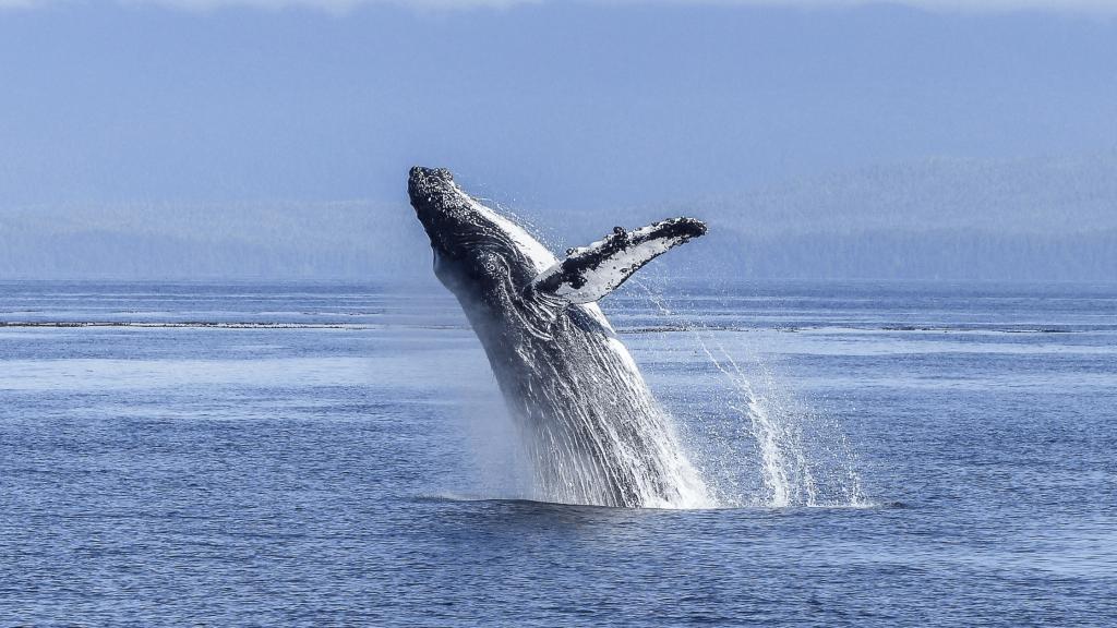 Summer LBC - Whale - Canva