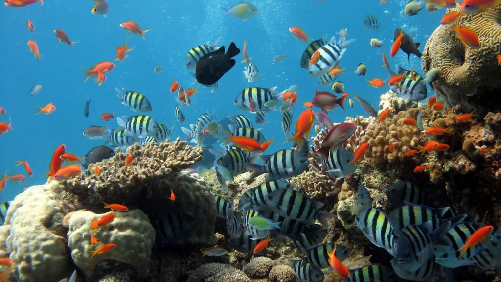 Summer LBC - Aquarium - Canva