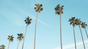 Long Beach CA Real Estate Market Update August 2020