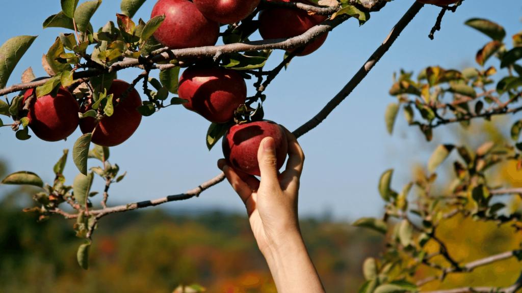 Fall Feeling - Apple Picking
