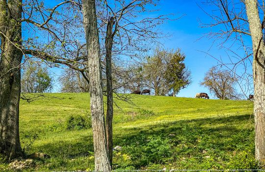 Small-House-Big-Land-for-sale-Kentucky-105