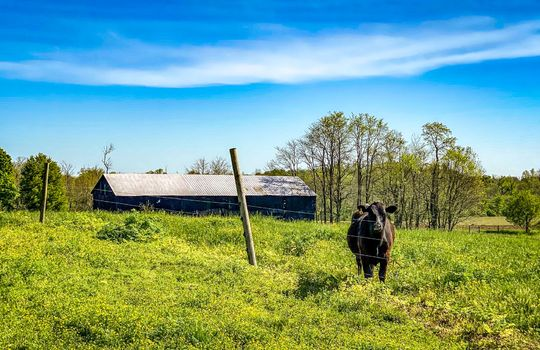 Small-House-Big-Land-for-sale-Kentucky-112