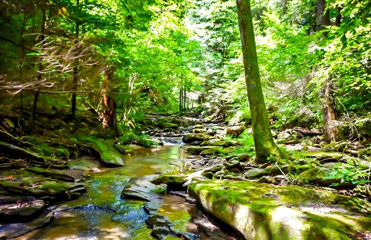 Property-for-sale-Kentucky-Mountains-010