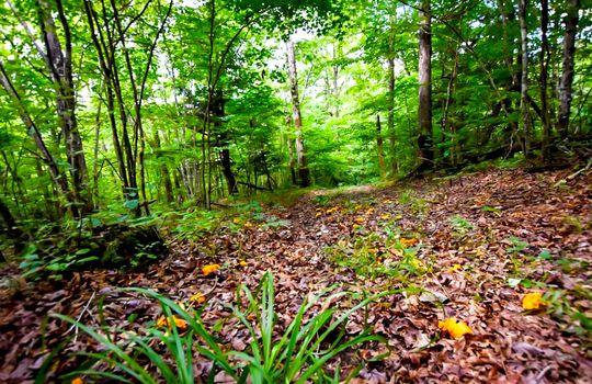 Property-for-sale-Kentucky-Mountains-030