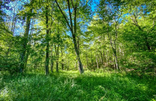 Property-for-sale-Kentucky-Mountains-048
