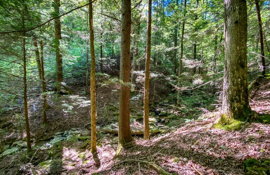 Property-for-sale-Kentucky-Mountains-060