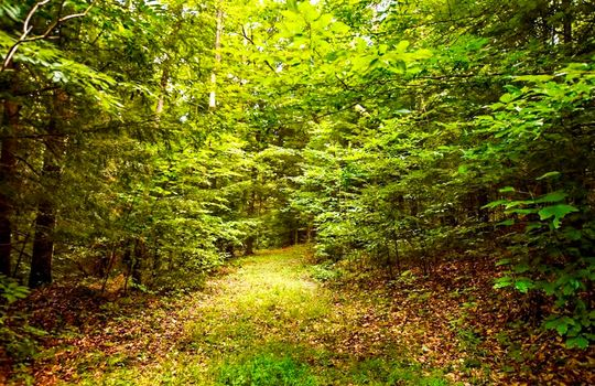 Property-for-sale-Kentucky-Mountains-074