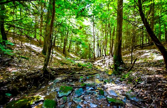Property-for-sale-Kentucky-Mountains-079
