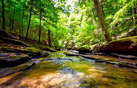 Property-for-sale-Kentucky-Mountains-088