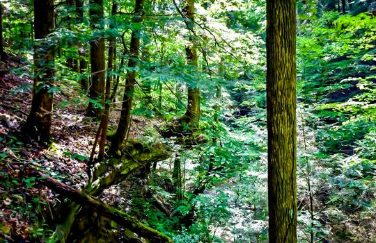 Property-for-sale-Kentucky-Mountains-089