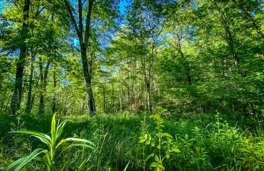 Property-for-sale-Kentucky-Mountains-090