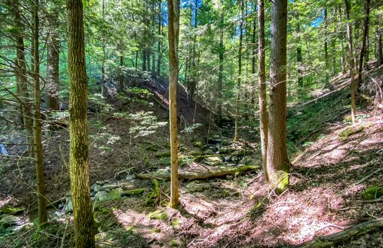 Property-for-sale-Kentucky-Mountains-095