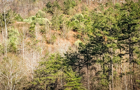 Mountain Property Cheap Land for Sale-040