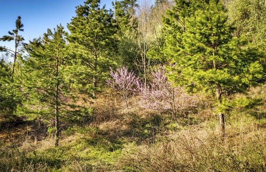Mountain Property Cheap Land for Sale-044