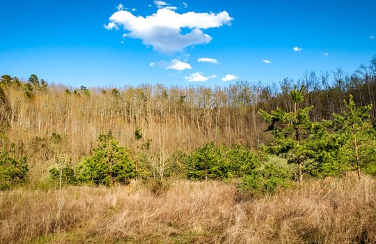 Mountain Property Cheap Land for Sale-050
