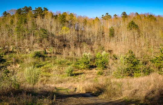 Mountain Property Cheap Land for Sale-053