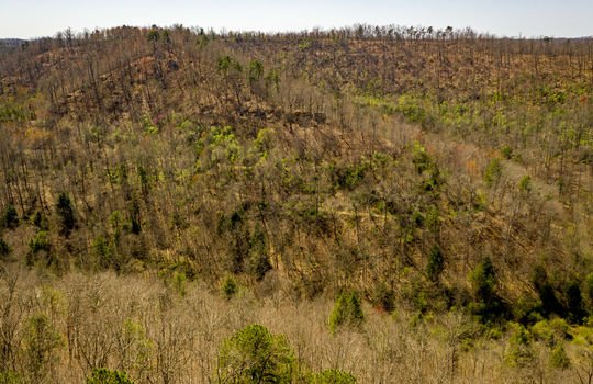 Mountain Property Cheap Land for Sale-092