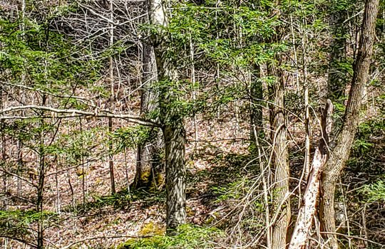 Mountain Property Cheap Land for Sale-100