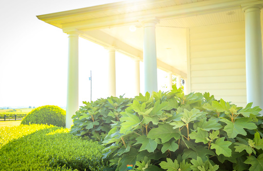 House with land for sale Kentucky 163