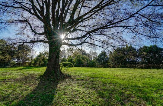 2801 Cowles Road, Charlotte, NC 28208 backyard2 small