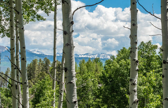 491-Forest-Trail-Website-and-MLS-Malia-Edited-0053
