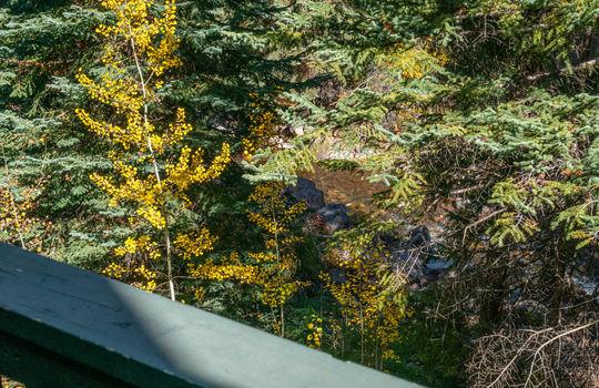 18 Timber Falls #503